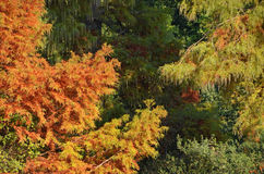 Colorful foliage. Colorful trees in the tropical forest Royalty Free Stock Photo