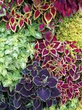 Colorful foliage Stock Image