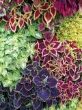 Colorful foliage Stock Image