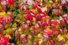 Colorful foliage Royalty Free Stock Photography