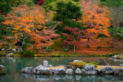 Colorful foliage in the autumn and japan style pond. Stock Images