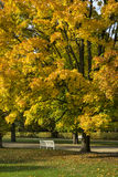 Colorful foliage in the autumn Lazienki Krolewskie park in Warsa Royalty Free Stock Image