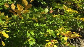 Colorful foliage stock video footage