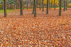 Colorful foliage in the autumn park Royalty Free Stock Image