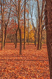 Colorful foliage in the autumn park Royalty Free Stock Photography