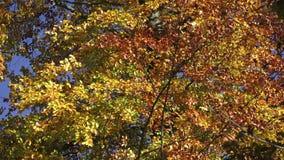 Colorful foliage stock footage
