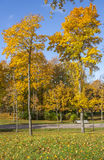 Colorful foliage in the autumn park. Stock Images