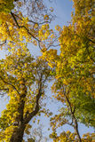 Colorful foliage in the autumn park. Kadriorg ,Tallinn City,Estonia Royalty Free Stock Images