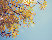 Colorful foliage in the autumn park Stock Image