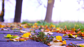 Colorful foliage in the autumn park. Nature background Royalty Free Stock Photos