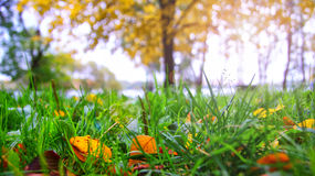 Colorful foliage in the autumn park. Nature background Royalty Free Stock Photography