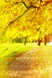 Colorful foliage in autumn park Royalty Free Stock Images