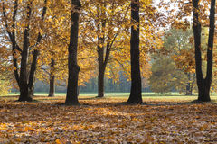 Colorful foliage in the autumn park Royalty Free Stock Photos