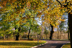 Colorful foliage in the autumn park Stock Images