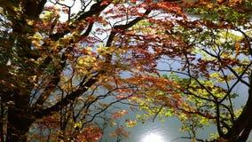 Colorful foliage of autumn at the shore of Onuma Pond