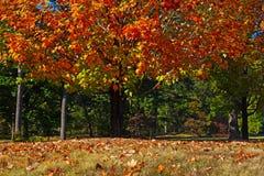 Colorful foliage of deciduous trees in National Arboretum, Washington DC. Stock Photos