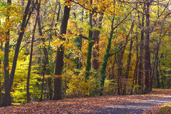 Colorful foliage of deciduous trees in the park. Royalty Free Stock Photo