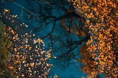 Colorful foliage floating in the dark water with reflection of the trees royalty free stock photos