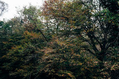 Colorful foliage. In a forest in autumn month stock image