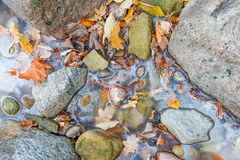 Colorful foliage in frozen water. Maple and oak foliage in the frozen sea between stones close up. Typical estonian autumn nature macro Stock Images