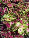 Colorful foliage stock photos