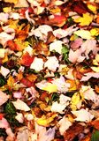 Colorful foliage in the park. stock image