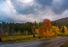 Colorful foliage on serpentine in rainy fall weather. Dramatic scene in mountains Stock Image