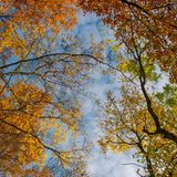 Colorful foliage on a sky background. Turn your head up. beautiful autumn mood stock photo