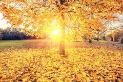 Sunny autumn foliage. Colorful foliage in the sunny autumn park Stock Photos
