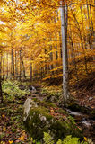 Colorful forest. An amazing and colorful forest in the slovakia Stock Images