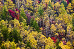 Colorful forest in autumn Royalty Free Stock Image