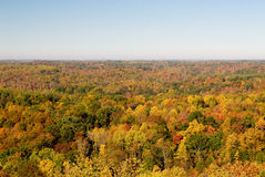 Colorful forest in autumn. Scenic view of colorful forest in autumn scene, Athens, Ohio, U.S.A Royalty Free Stock Photo