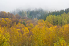 Colorful Forest in Autumn. Colorful Autumn in Trossachs National Park in Scotland, Great Britain Stock Images