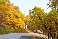 The colorful forest and curved path Royalty Free Stock Photos