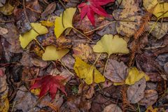 Colorful forest floor in autumn stock image