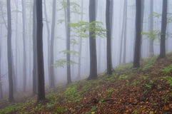 Colorful forest with fog in autumn. With purple haze Royalty Free Stock Image