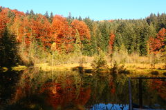 Colorful forest and a lake in the Carpathians Royalty Free Stock Photography