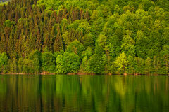 Colorful forest by lake in reflection in water Royalty Free Stock Photography