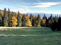 Colorful forest and meadow. Colorful autumn forest and green meadow Royalty Free Stock Images