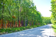 The Colorful Forest or Padurea Colorata from Poienari Romania. Amazing tree trunks painted in many different colors. Nobody will royalty free stock images