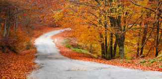 Colorful forest panorama Royalty Free Stock Photography