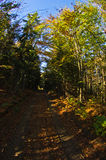 Colorful forest path at autumn morning, Cemerno mountain Royalty Free Stock Image