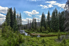 Colorful forest in Rocky Mountain National Park Royalty Free Stock Image