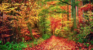 Colorful forest scenery in autumn royalty free stock images