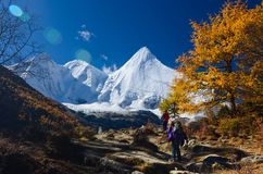 Colorful forest and snow mountain at Yading nature reserve royalty free stock photos