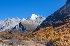 Colorful forest and snow mountain at Yading nature reserve royalty free stock photography