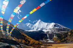 Colorful forest and snow mountain at Yading nature reserve royalty free stock images