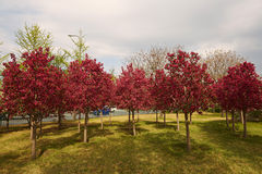 Colorful forest in spring season Royalty Free Stock Image