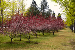 Colorful forest in spring season Stock Photos