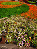 Colorful formal garden. Royalty Free Stock Images
